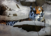 Pittsburgh Zoo Prints - Mara Print by Lori Deiter