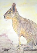 Hare Mixed Media Prints - Mara patagonica Print by Arte Ivanna
