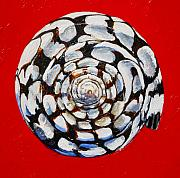 Sea Shell Originals - Marble Cone Shell on Red by Tracy Effinger