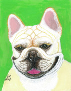 Custom Pet Portrait Pastels Acrylic Prints - Marcel French Bulldog Acrylic Print by Ania M Milo