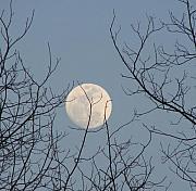 March Moon Print by Liz Vernand
