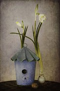 Blue House Framed Prints - March Framed Print by Priska Wettstein