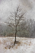 Winter Landscape Digital Art Prints - March Tree Print by Ron Jones