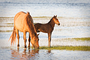 Rachel Carson Art - Mare and Foal by Bob Decker