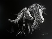 Mare Drawings - Mare and Foal by Jennifer Jeffris