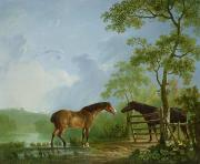 Stallion Framed Prints - Mare and Stallion in a Landscape Framed Print by Sawrey Gilpin