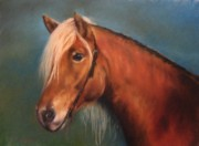 Horse Head Pastels Framed Prints - Mariella Framed Print by Sabina Haas