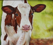 Calf Paintings - Marigold by Laura Carey