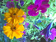 Padre Art Photos - Marigolds and Petunias by Padre Art