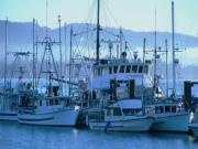 Sooke Originals - Marina Morning by Shannon Ireland