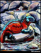 Jenn Cunningham - marine iguana