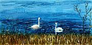 Mary Benke Acrylic Prints - Marion Lake Swans Acrylic Print by Mary Benke