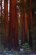 Giant Sequoia Posters - Mariposa Grove Before Sunset Poster by Jim Dohms