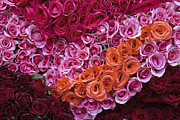 Travel Photographs Photos - Market Roses by John  Bartosik