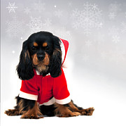 Cavalier Posters - Marmaduke with snowflake background Poster by Jane Rix