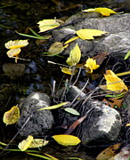 Fallen Leaf On Water Photo Metal Prints - Marooned Metal Print by Joe JAKE Pratt