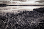 Lisa McStamp - Marsh at Night