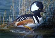 Eastern Point Paintings - Marsh Dweller  Hooded Merganzer Maryland 2010 Duck Stamp Winner by David Turnbaugh