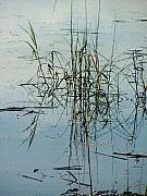 Marsh Grass Print by Donna Thomas