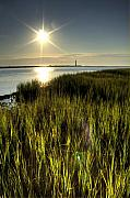 Folly Beach Posters - Marsh Grass Sunrise Poster by Dustin K Ryan