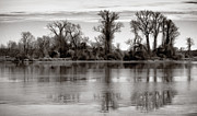 Bare Trees Metal Prints - Marsh Island Metal Print by Susan Isakson