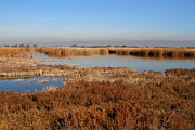 Salt Marsh Photos - Marsh Land At Coyote Hills Regional Preserve California . 7D10882 by Wingsdomain Art and Photography