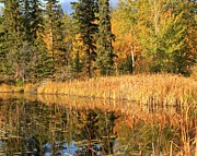 Fall Scenes Photo Originals - Marsh Reflection by Roland Stanke