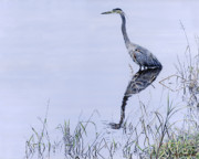 Waterfowl Paintings - Marsh Reflections - Great Blue Heron by Craig Carlson