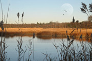 Flying Bird Metal Prints - Marshland Metal Print by Diana Lee Angstadt