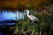 Marsh Bird Prints - Marshland Print by Ted Petrovits