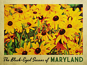 Black Eyed Susans Framed Prints - Maryland Black-Eyed Susans Framed Print by Vintage Poster Designs