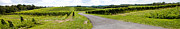 Wine Vineyard Photos - Maryland Vineyard Panorama by Thomas Marchessault