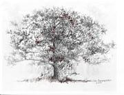 Jim Hubbard - Maryland-White Oak
