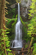 Lush Green Posters - Marymere falls in Olympic National park Poster by Pierre Leclerc