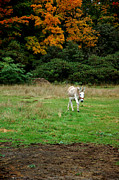 LeeAnn McLaneGoetz McLaneGoetzStudioLLCcom - Marys Donkey