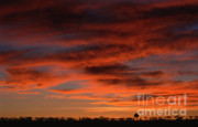 Sandra Bronstein - Masai Mara Sunset
