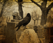Crow Image Framed Prints - Master Framed Print by Gothicolors And Crows