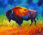 Buffalo Framed Prints - Master Of His World Framed Print by Marion Rose