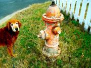 Dog Photo Originals - Matching Dog and Fire Hydrant by Chuck Taylor