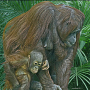 Orangutan Photos - Maternal Protection by Larry Linton