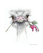 Ratite Drawings Prints - Matilda the Ostrich Print by Mamie Greenfield