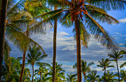 Coconut Palms Prints - Maui Coconut Palms Print by Kelly Wade