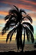 Tropical Sunset Framed Prints - Maui Hawaii Sunset Palm Framed Print by Pierre Leclerc
