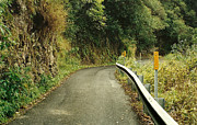 Country Lanes Photo Prints - Maui Highway Print by Marilyn Wilson