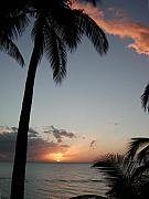 Palm Tree Greeting Cards - Maui Sunset by Dustin K Ryan