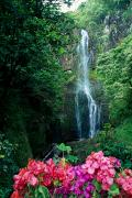 Huge Photo Prints - Maui Waterfall Print by Dave Fleetham - Printscapes