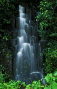 Amaze Acrylic Prints - Maui Waterfall Acrylic Print by Ron Dahlquist - Printscapes