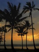 Palm Trees Fronds Posters - Mauna Loa Sunset - Big Island Hawaii Poster by Daniel Hagerman
