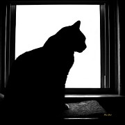 Felines Dale Ford Prints - Max in Silhouette Print by Dale   Ford