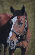 Thoroughbred Pastels Framed Prints - Max Framed Print by Joanne Grant